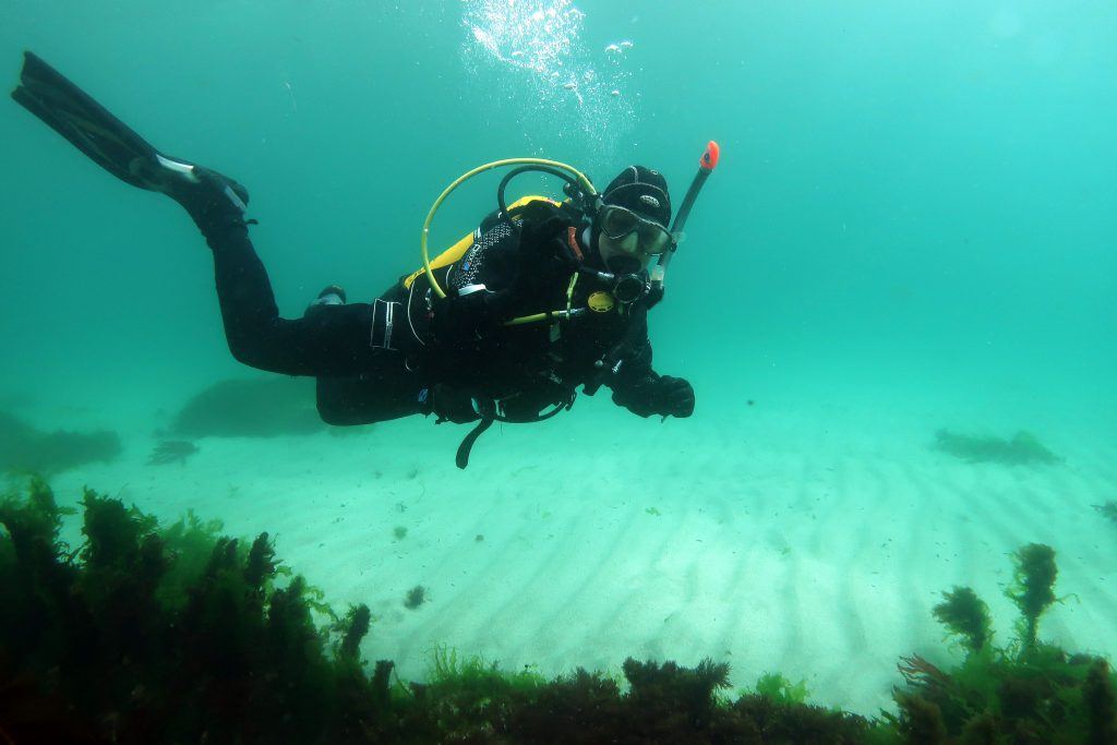 Learn more about our amazing seabed