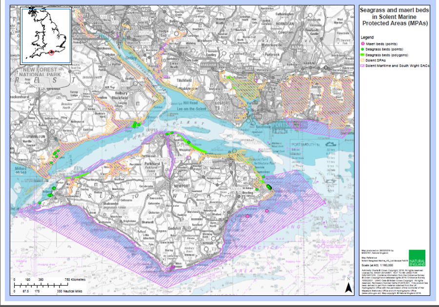Map of Solent seagrass and maerl