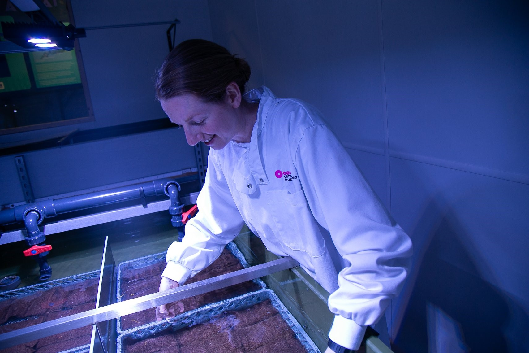 Seagrass lab at the NMA, Plymouth