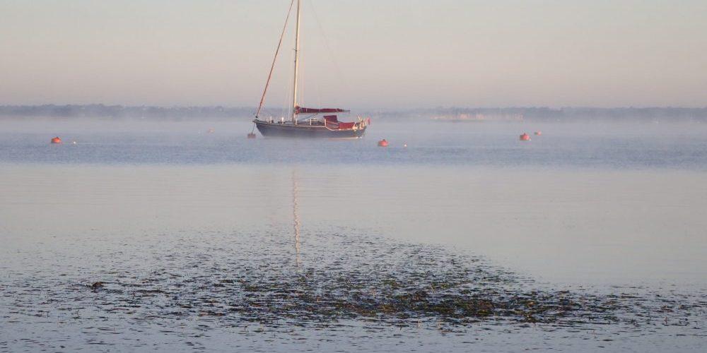 Yarmouth 2018 Zostera marina in foreground credit Tim Ferrero/Hampshire and Isle of Wight Wildlife Trust